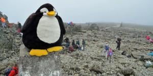 Auch Pingu war oben