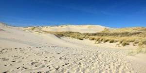 Dünen von Texel