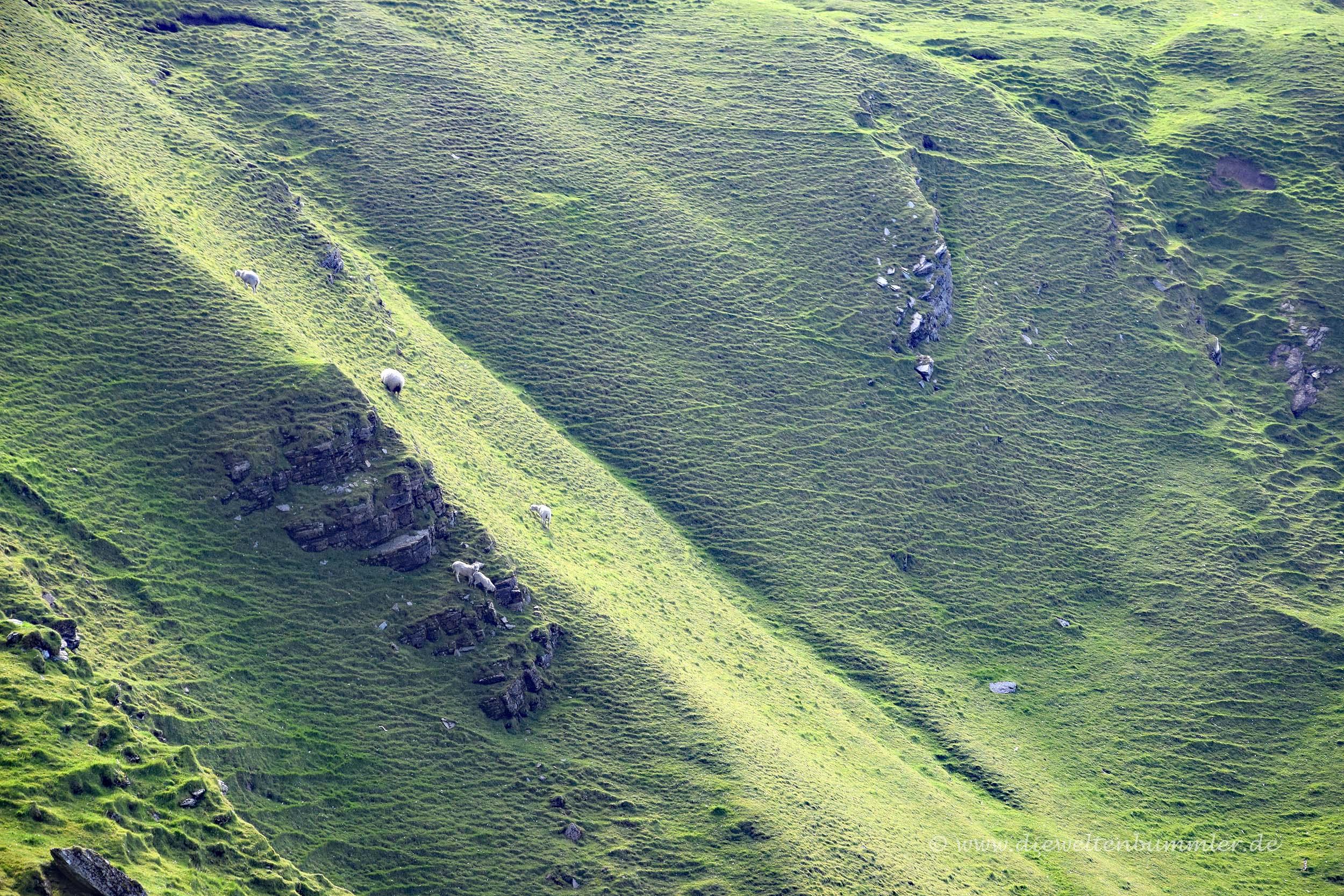 Steiler Hang mit Schafen