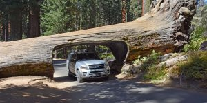 Sequoia-Nationalpark in Kalifornien