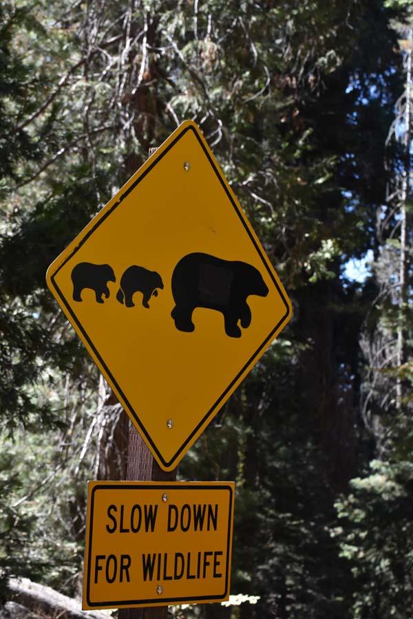 Warnhinweis vor Bären