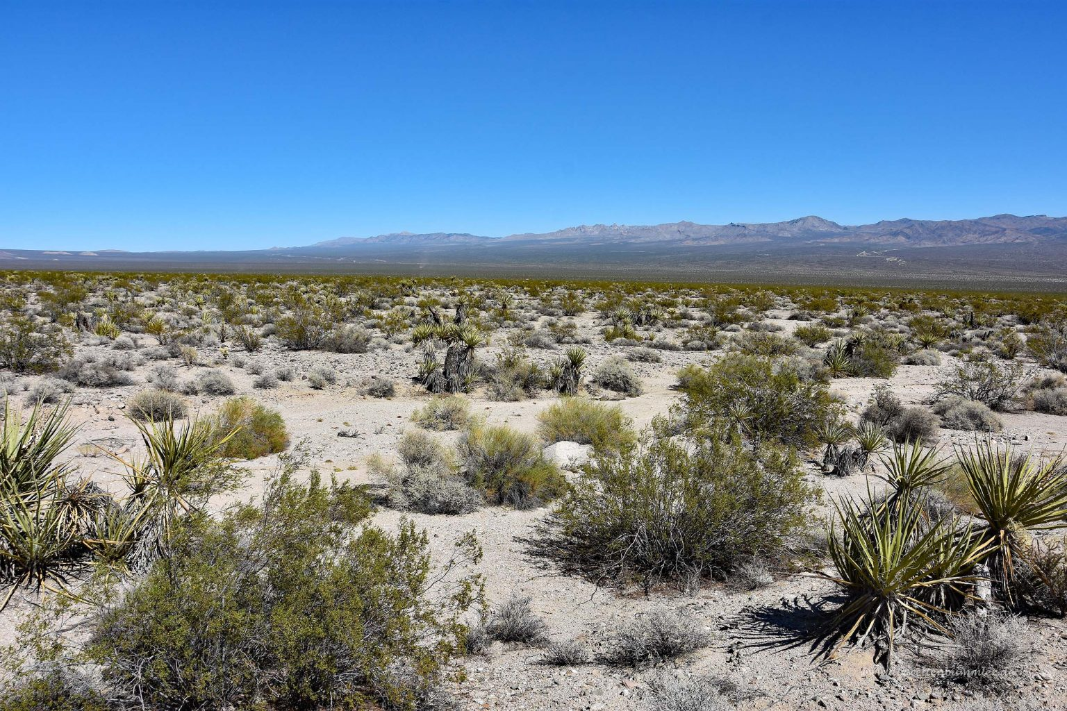Mojave-Wüste