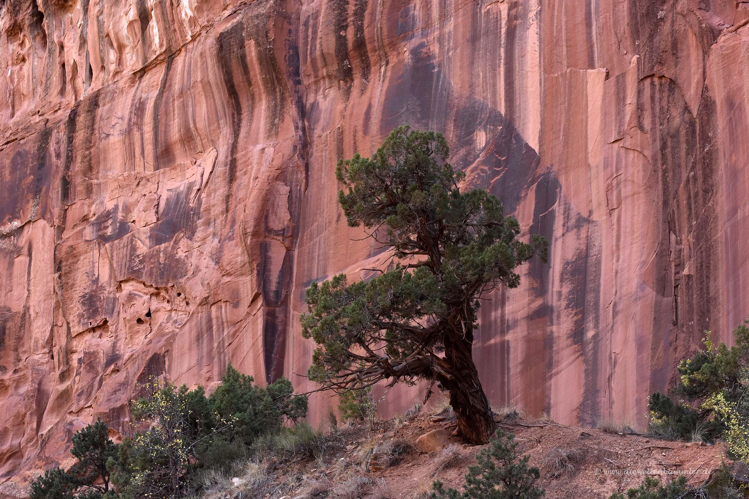 Einsamer Baum vor mächtiger Felswand