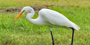 Besuch im Everglades-Nationalpark