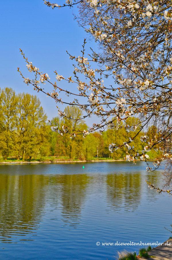 Frühlingserwachen an der Ruhr