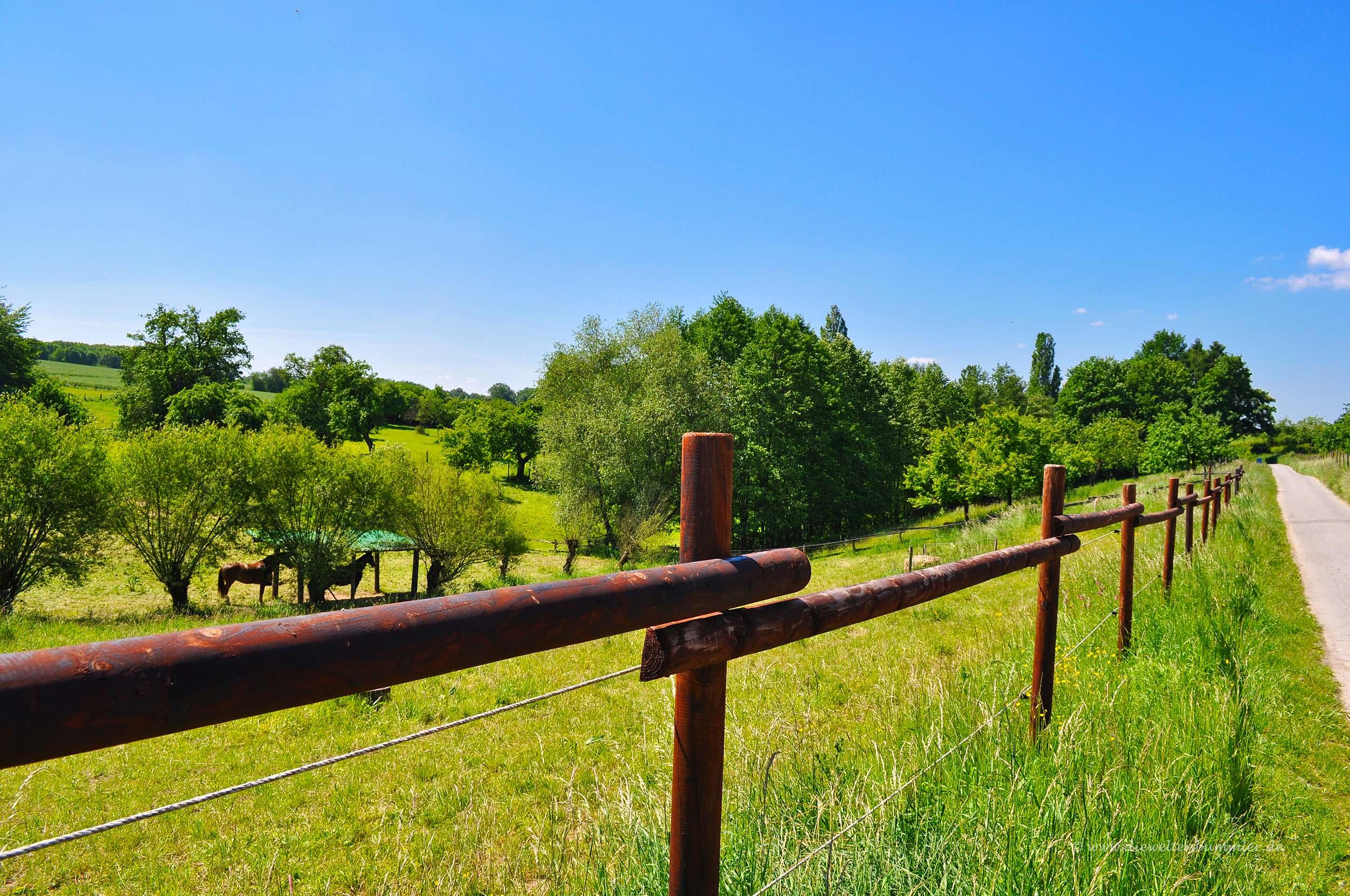 Pferdekoppeln am Wegesrand
