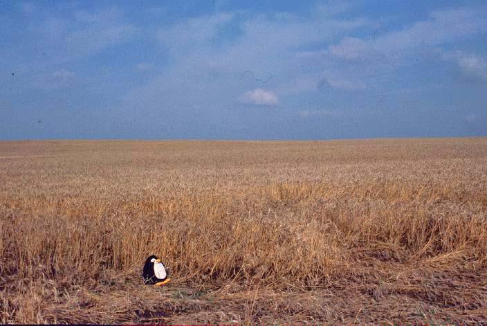 Getreidefeld in Polen