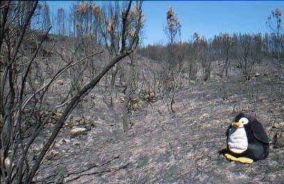Nach einem Waldbrand in Portugal