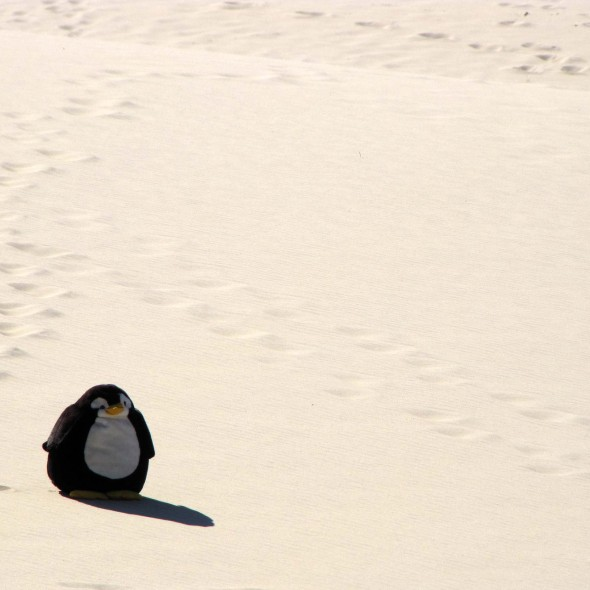 Pingu auf der Düne