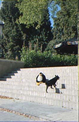 Schengen mit Hund