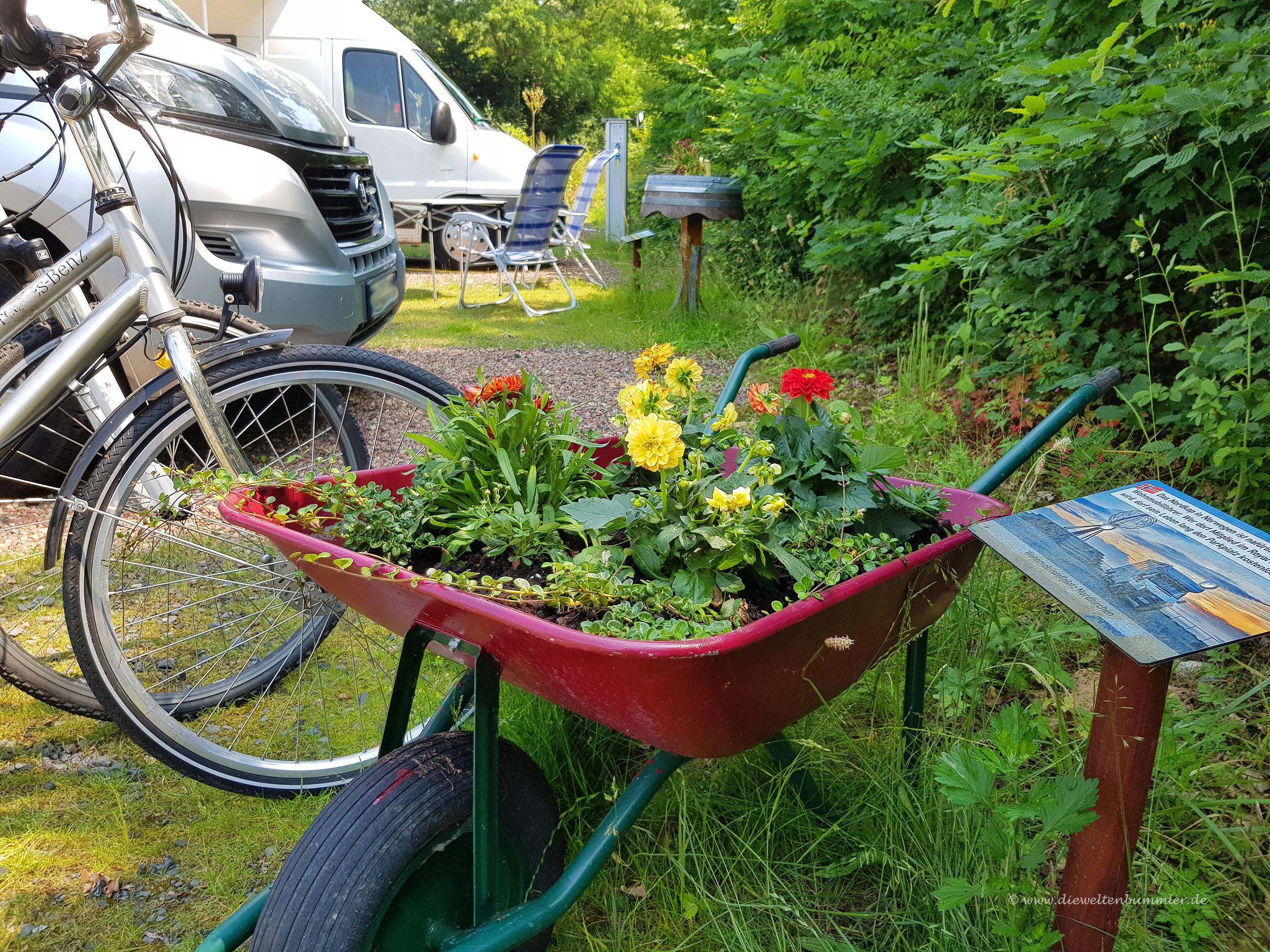 Blumen in der Schubkarre
