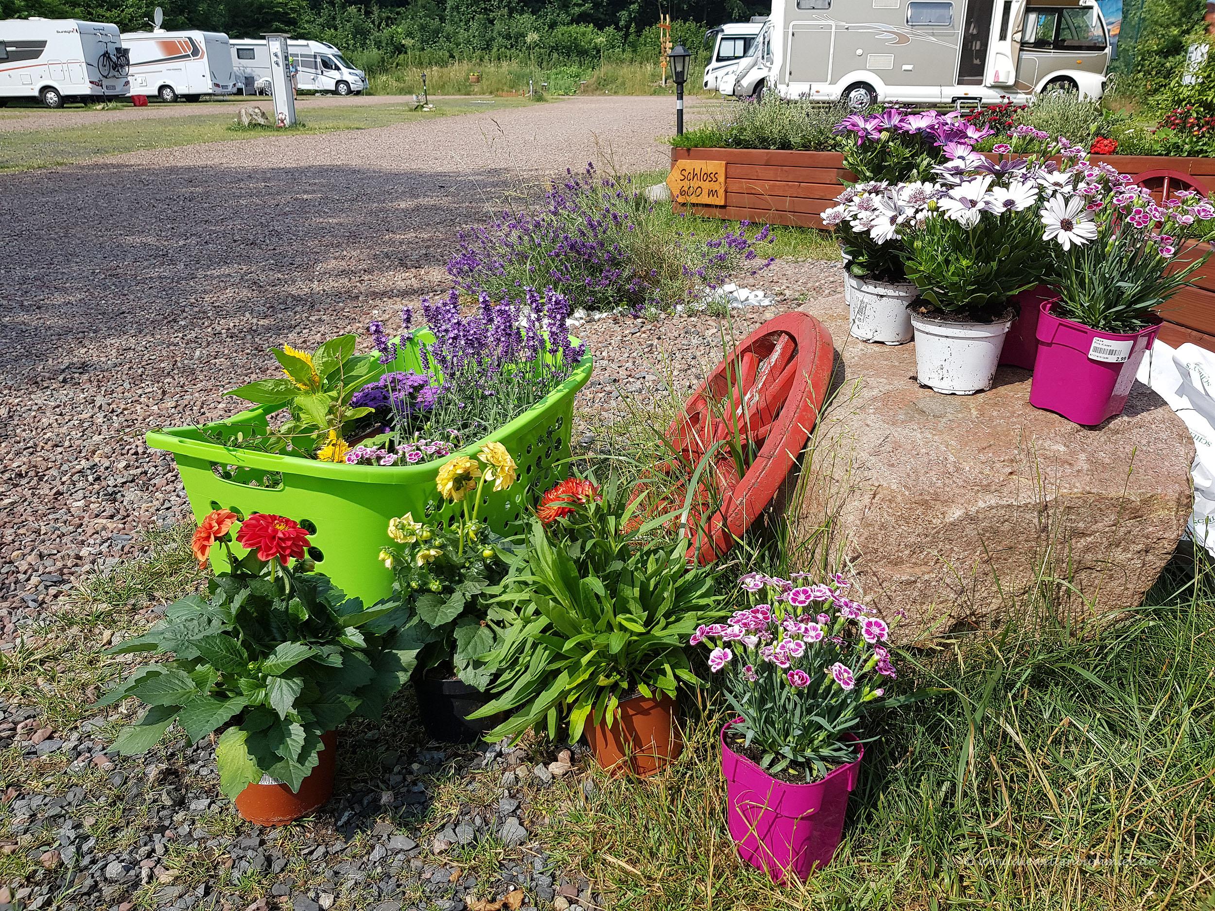 Frische Pflanzen für den Stellplatz