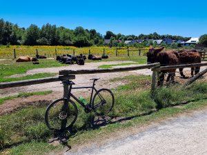 Poitou-Esel und Drahtesel