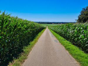 Zwischen den Feldern hindurch
