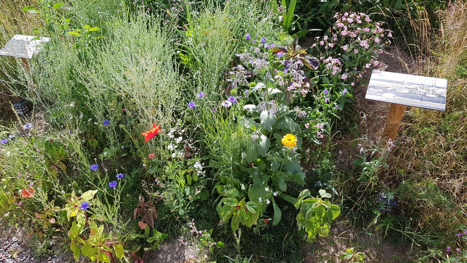 Wildblumen für Insekten