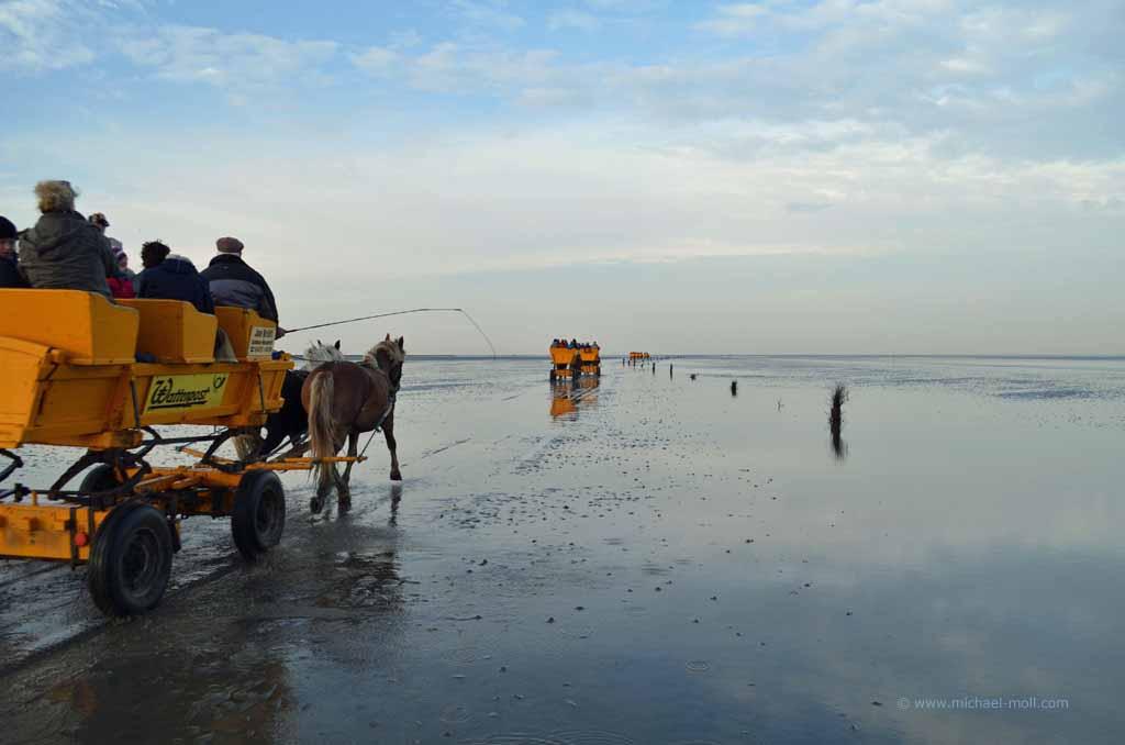 Pferdekutschen im Watt