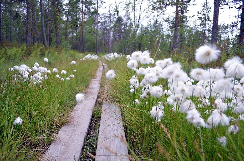 Wanderweg auf Holzstegen