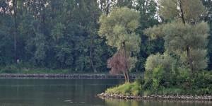 Ehemalige Altmuehl in die Donau