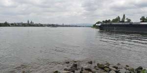 Main in den Rhein