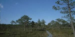 Weg durchs Hochmoor