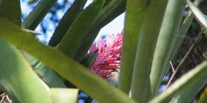 Subtropische Blume