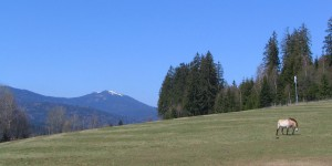 Landschaft in Ostbayern