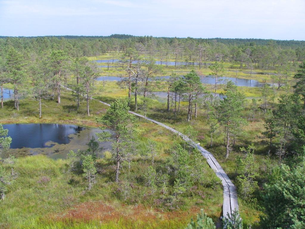 Moor in Nordestland