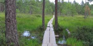 Weg durch das Hochmoor