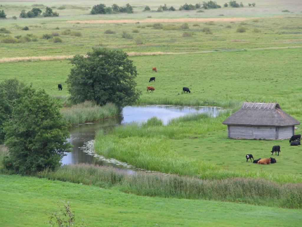 Estnische Landschaft