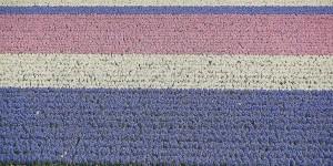 Blumenfelder