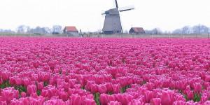 Blumen und Windmühle