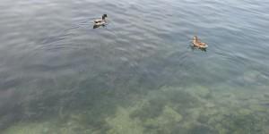 Klares Wasser im Gardasee