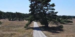 Wanderweg durch die Heide