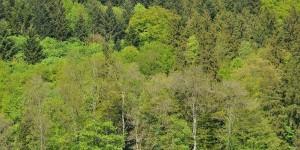 Grünes Luxemburg