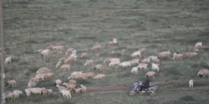 Schäfer mit Motorrad
