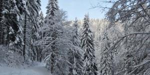 Schneelandschaft im Thüringer Wald