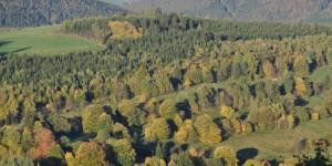 Thüringer Wald bei Oberschönau