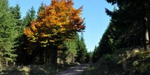 Herbstlicher Wanderweg bei Oberhof