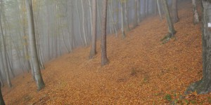 Thüringer Wald bei Steinbach-Hallenberg