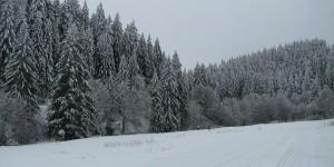 Landschaft bei Willingen im Sauerland