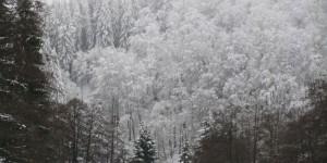 Winterlandschaft im Sauerland