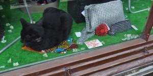 Katze im Schaufenster