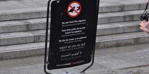 Tauben füttern verboten