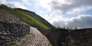 Wanderung zur Rosenburg
