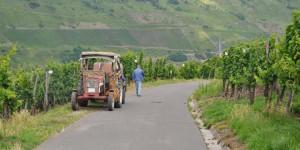 Weinbauer bei der Arbeit