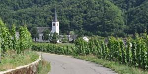 Wandern zwischen den Weinstöcken