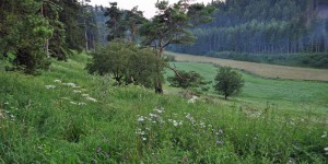 Wanderung bei Breitenbrunn