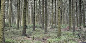 Dichter Wald