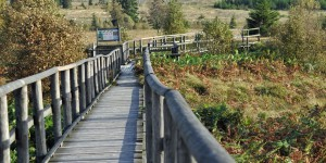 Wanderweg auf Holz