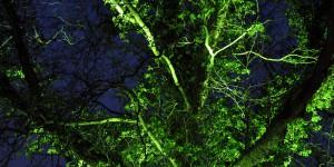 Angestrahlter Baum